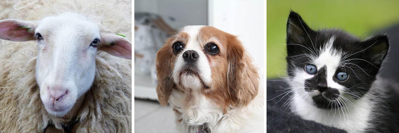 honden orthopeed